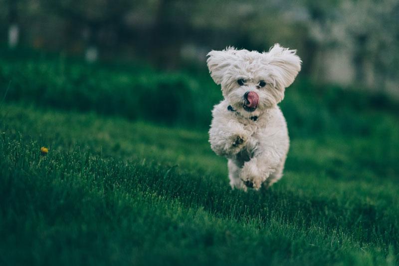 Read more about the article Welches Futter macht meinen Hund satt, aber nicht dick?