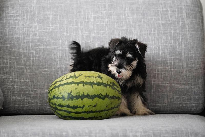 Read more about the article Hundefutter wechseln oder nicht – wann sollte ich es tun?