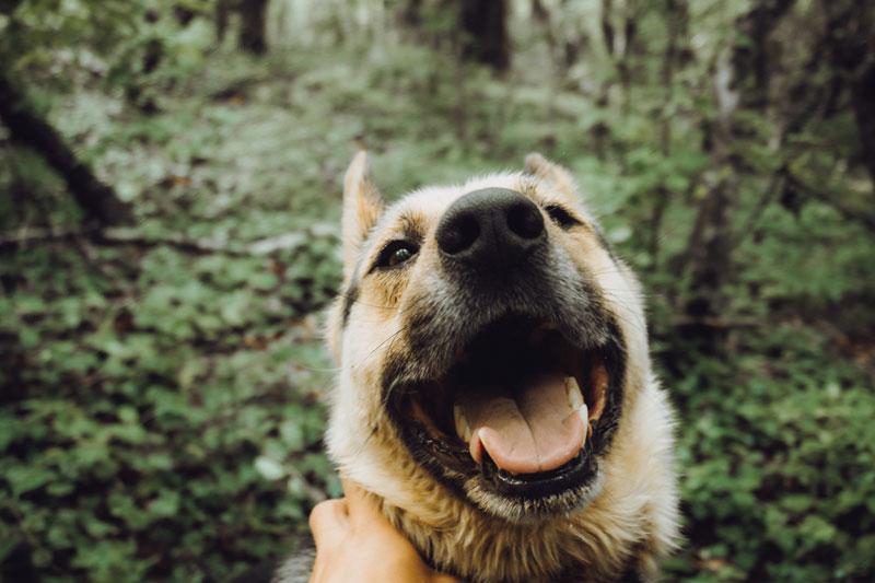 glücklicher-Hund